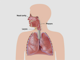 Upper Respiratory Tract Infections Goshen NY